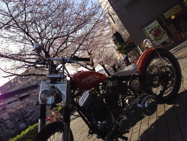 桜、満開!SCNの締切迫る!!!